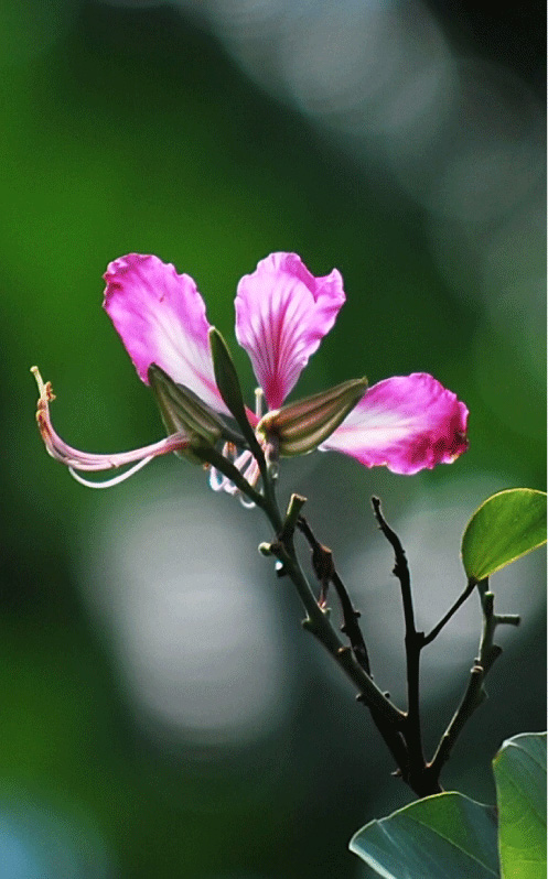 Flora diversity at Taman Negeri Rompin Pahang